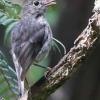 New-zealand-Day-Nineteen-Auckland-Tiritiri-Matangi-birds-9-of-9