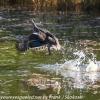 New-Zealand-Day-Seven-Glenorchy-birds-3-of-33