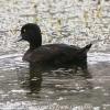 New-Zealand-Day-Seven-Glenorchy-birds-3-of-5