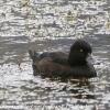 New-Zealand-Day-Seven-Glenorchy-birds-4-of-5