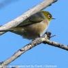 New-Zealand-Day-Seven-Glenorchy-birds-5-of-33