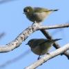 New-Zealand-Day-Seven-Glenorchy-birds-6-of-33