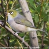 New-Zealand-Day-Seven-Glenorchy-birds-7-of-33