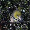 New-Zealand-Day-Seven-Glenorchy-birds-8-of-33