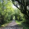 New-Zealand-Day-Seven-Glenorchy-walkway-1-of-34