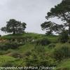 New-zealand-Day-Seventeen-Matamata-Hobbiton-part-one-February-22-3-of-50
