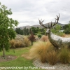 New-Zealand-Day-Six-Mount-Cook-to-Queenstown-fruit-stand-7-of-21