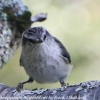 New-Zealand-Day-Six-Mount-Cook-birds-5-of-13