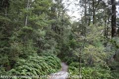 New Zealand Day Six : Mount Cook morning walk Monday February ii 2019