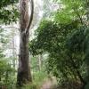 New-zealand-Day-Sixteen-Rotorua-morning-hike-13-of-48