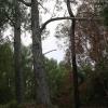 New-zealand-Day-Sixteen-Rotorua-morning-hike-5-of-48