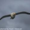 New-Zealand-Day-Ten-Stewart-Island-Rakiura-walk-birds-1-of-19