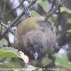 New-Zealand-Day-Ten-Stewart-Island-Rakiura-walk-birds-10-of-19