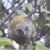 New-Zealand-Day-Ten-Stewart-Island-Rakiura-walk-birds-11-of-19