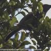 New-Zealand-Day-Ten-Stewart-Island-Rakiura-walk-birds-12-of-19