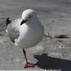 New-Zealand-Day-Ten-Stewart-Island-Rakiura-walk-birds-16-of-19