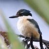New-Zealand-Day-Ten-Stewart-Island-Rakiura-walk-birds-17-of-19