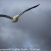 New-Zealand-Day-Ten-Stewart-Island-Rakiura-walk-birds-2-of-19