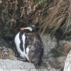 New-Zealand-Day-Ten-Stewart-Island-Rakiura-walk-birds-3-of-19