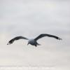 New-Zealand-Day-Ten-Stewart-Island-Rakiura-walk-birds-5-of-19