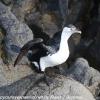 New-Zealand-Day-Ten-Stewart-Island-Rakiura-walk-birds-6-of-19