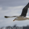 New-Zealand-Day-Ten-Stewart-Island-Rakiura-walk-birds-8-of-19