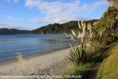 New Zealand Day Ten Stewart Island Port Willi am Rakiura hike February  15 2019