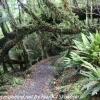 New-Zealand-Day-Ten-Stewart-Island-Rakiura-11-of-48