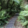 New-Zealand-Day-Ten-Stewart-Island-Rakiura-13-of-48
