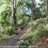 New-Zealand-Day-Ten-Stewart-Island-Rakiura-14-of-48