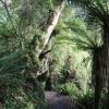 New-Zealand-Day-Ten-Stewart-Island-Rakiura-7-of-48