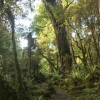 New-Zealand-Day-Ten-Stewart-Island-Rakiura-8-of-48