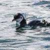 New-Zealand-Day-Thirteen-Dunedin-Otaga-Peninsula-birds-1-of-36
