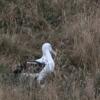 New-Zealand-Day-Thirteen-Dunedin-Otaga-Peninsula-birds-11-of-36