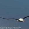 New-Zealand-Day-Thirteen-Dunedin-Otaga-Peninsula-birds-13-of-36