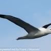 New-Zealand-Day-Thirteen-Dunedin-Otaga-Peninsula-birds-16-of-36