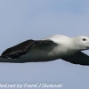New-Zealand-Day-Thirteen-Dunedin-Otaga-Peninsula-birds-17-of-36