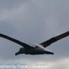 New-Zealand-Day-Thirteen-Dunedin-Otaga-Peninsula-birds-19-of-36