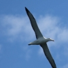 New-Zealand-Day-Thirteen-Dunedin-Otaga-Peninsula-birds-20-of-36