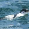 New-Zealand-Day-Thirteen-Dunedin-Otaga-Peninsula-birds-6-of-36