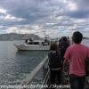 New-Zealand-Day-Thirteen-Dunedin-Otaga-Peniinsula-harbor-cruise-1-of-42