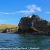 New-Zealand-Day-Thirteen-Dunedin-Otaga-Peniinsula-harbor-cruise-14-of-42