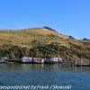 New-Zealand-Day-Thirteen-Dunedin-Otaga-Peniinsula-harbor-cruise-17-of-42