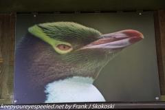 New Zealand Day Thirteen Dunedin Otago Peninsula yellow penguin sanctuary February 18 2019