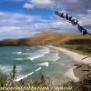New-Zealand-Day-Thirteen-Dunedin-Otaga-Peninsula-yelow-eyed-penguins-walk-11-of-21