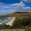 New-Zealand-Day-Thirteen-Dunedin-Otaga-Peninsula-yelow-eyed-penguins-walk-9-of-21