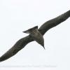 New-Zealand-Day-Twelve-Dunedin-birds-1-of-7