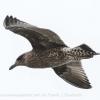 New-Zealand-Day-Twelve-Dunedin-birds-2-of-7