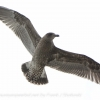 New-Zealand-Day-Twelve-Dunedin-birds-3-of-7