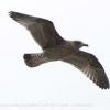 New-Zealand-Day-Twelve-Dunedin-birds-5-of-7